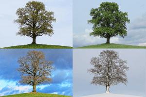 Jahreszeitenwechsel